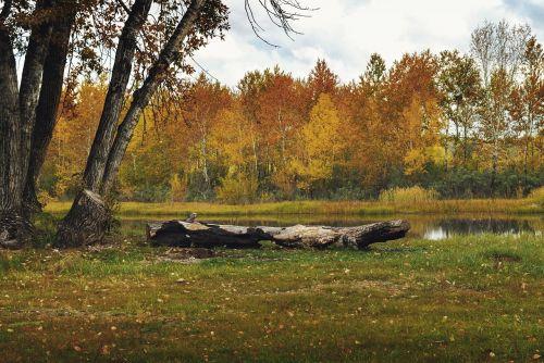 miškas,ruduo,gamta,parkas,ežeras,auksas,medžiai,šviesus,grožis,kraštovaizdis,žurnalas,papludimys,poilsis,žygiai,vaikščioti