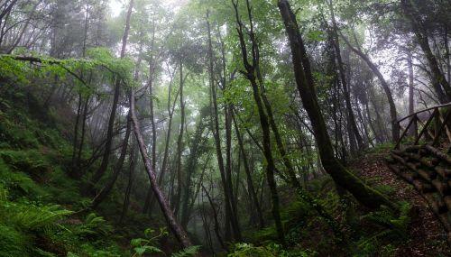 forest landscape mist