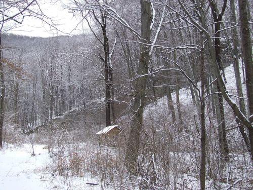 forest winter beech mountain