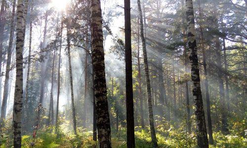 the sun's rays light forest