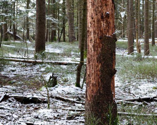 forest damage tree bark damaged