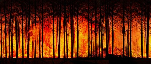 forest fire  forest  climate change