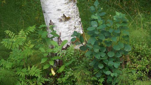 forest floor diversity vegetation