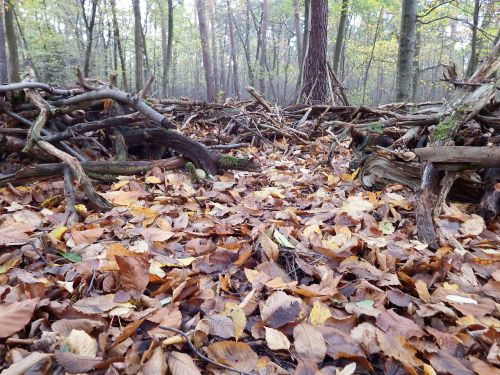 forest floor leaves undergrowth