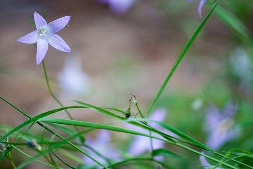 forest flower  purple  leaf