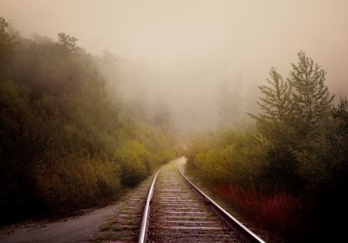 Forest, Fog, Road