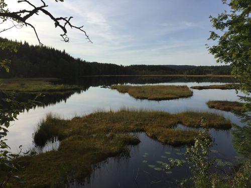 miško ežeras,vaizdingas,miškas,ežeras,vanduo,gamta,medis,kraštovaizdis,atspindys,peizažas,dangus,kalninis ežeras,ramus,kalnas,natūralus,ramus,miško peizažas