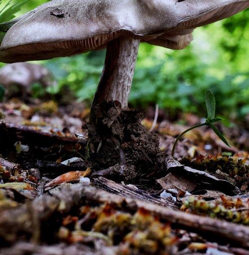 forest mushroom  mushroom  forest floor