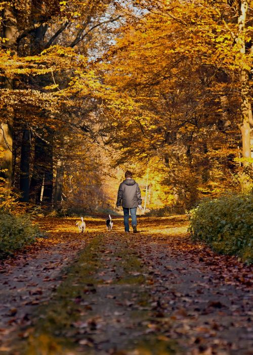 forest path autumn walkers