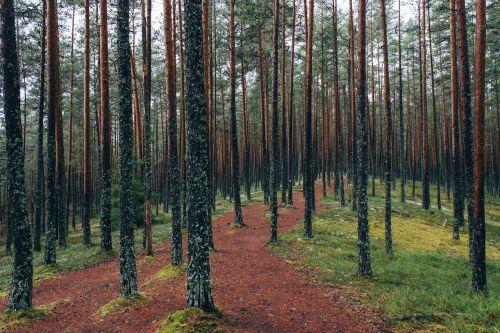 miško takas,miškai,miškas,gamta,kelias,kraštovaizdis,takas,lapija