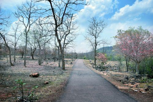 kelias, kelias, miškas, gamta, medžiai, miško kelias 13