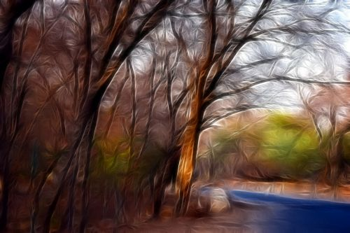 miškas, kelias, kelias, gamta, medžiai, miško kelias 14