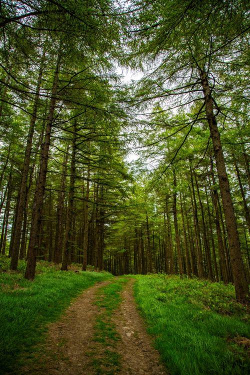 kelias, miškas, žalias, diena, vasara, parkas, lauke, gamta, lapai, augalai, medis, kelias, miškai, juostos, peizažai, alėja, miško kelias
