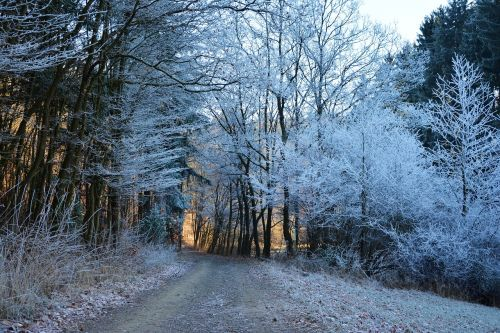 forest path winter hoarfrost