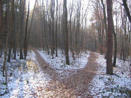 forest path winter crossroads
