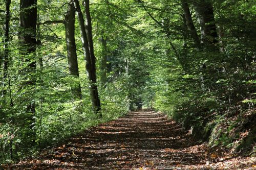 forest path autumn oak