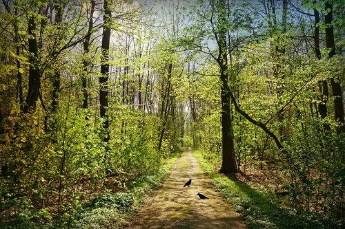 forest path  tree  foliage