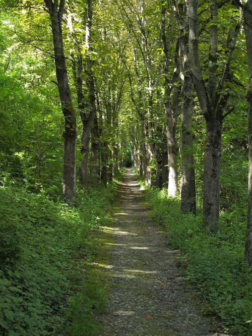 forest path avenue hanson