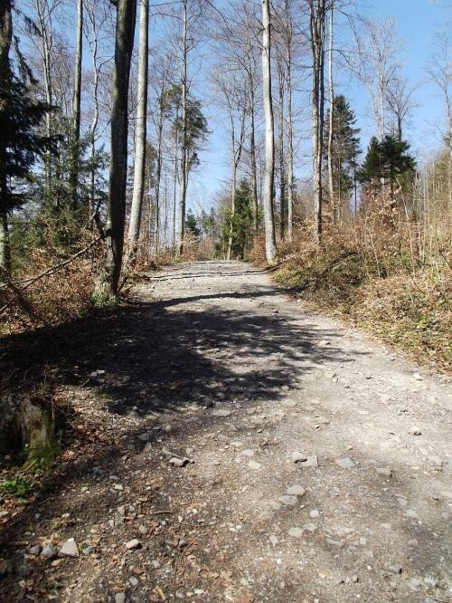 miško takas,toli,miškas,gamta,takas,kraštovaizdis,gamtos takas,vaikščioti