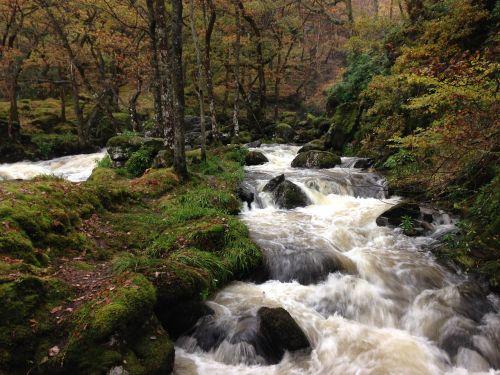 miško upė,tekantis vanduo,upė,srautas,miškas,teka,upelis,krioklys,torrent