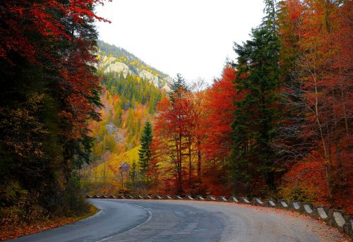forest road autumn trees