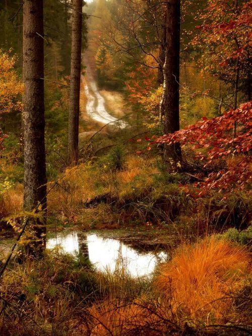 forest road lagoon autumn