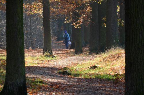 miško kelias,pėsčiųjų takas miške,kelias per mišką,rudens miškas,ruduo miške,gamta,takas,žmogus miške