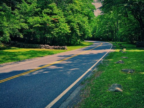 forest road  lonely  curve
