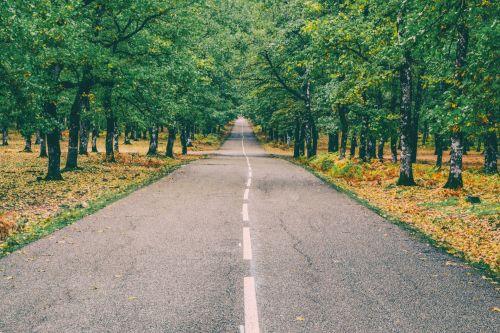 kelias, miškas, ruduo, kraštovaizdis, Graikija, foloi, kentauras, gamta, kelias, kritimas, lapija, sezonas, geltona, lapai, mediena, parkas, Šalis, žalias, kelias, lapai, migla, vaizdingas, spalvinga, aplinka, spalva, įkvėpimas, motyvacija, medžiai, kelionė, kalvos, miškai, out, miško kelias į priekį