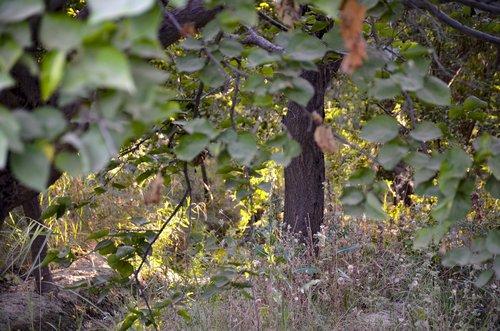 forest sunlight  forest  sunlight