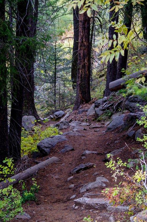 forest trail  mountain trail  trail