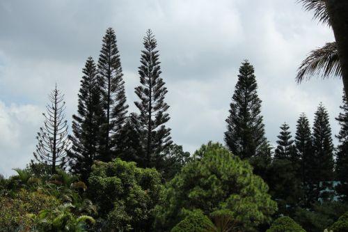 miškas, medžiai, žalieji & nbsp, medžiai, augalai, miško medžiai