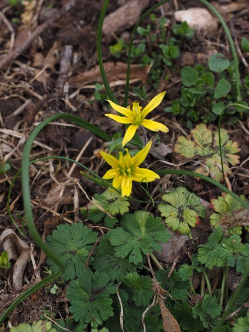 forest - yellow star flowers yellow