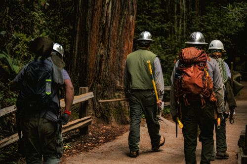 Forestry Workers