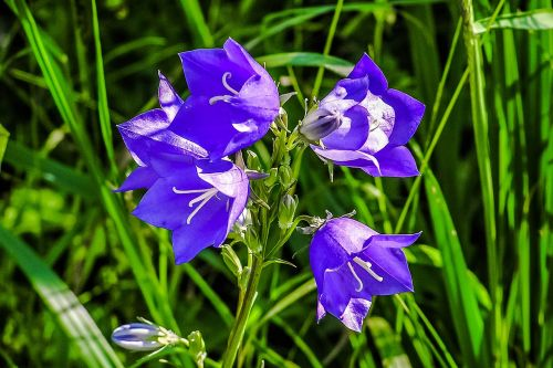 forever flowers priroda
