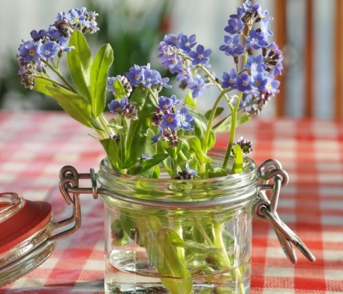 forget me not flowers blue