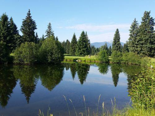 forrest montana wilderness