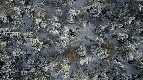 forrest winter drone