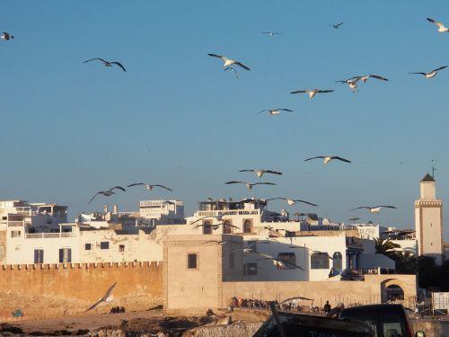 fort harbor morocco