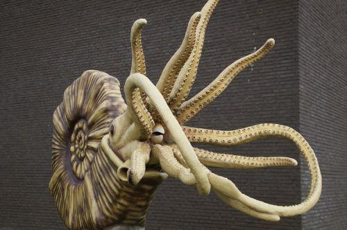 fossil nautilus ammonit