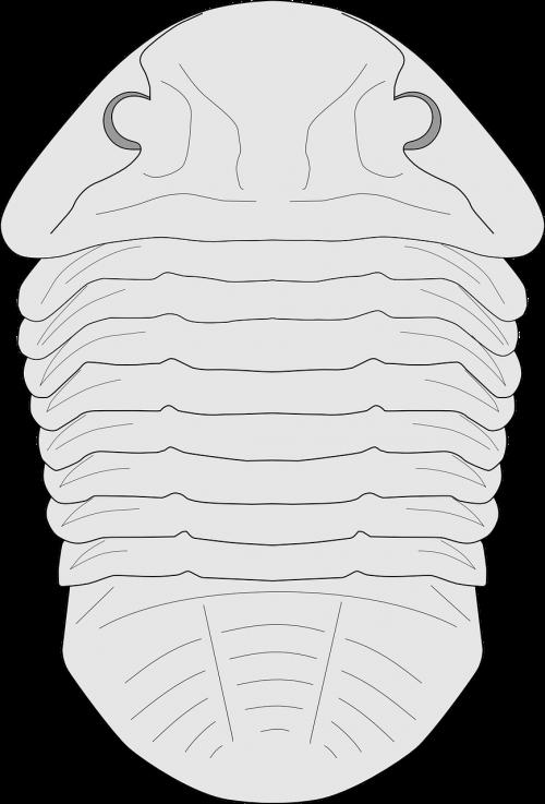 fossil trilobite creature