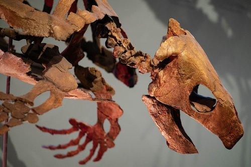 fossilized  turtle  bones