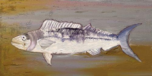 fossils fish meeresbewohner