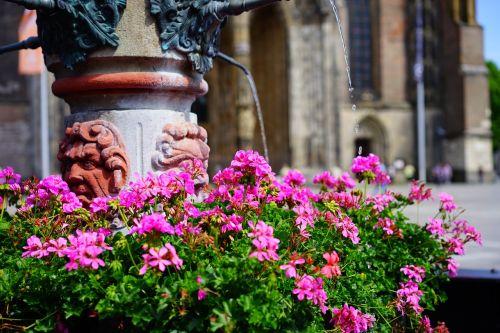 fountain water geranium