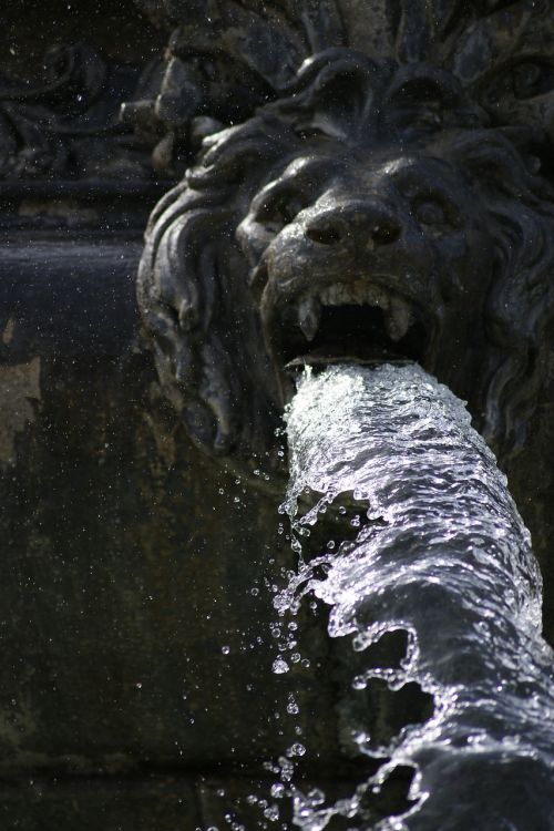 fountain lion water