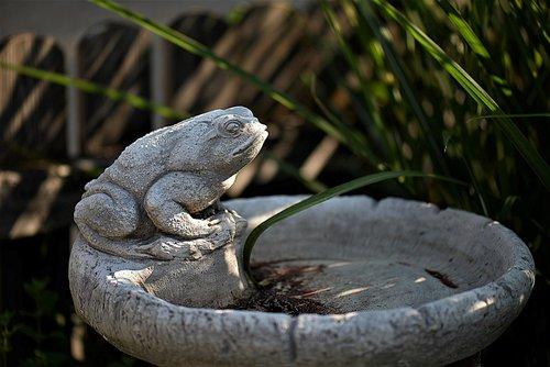 fountain  stone fountain  frog