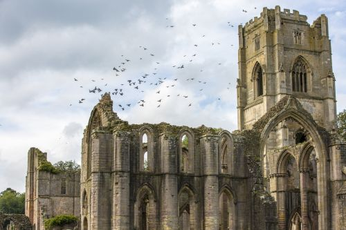Fountains Abbey And Birds