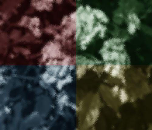 Four Color Rose
