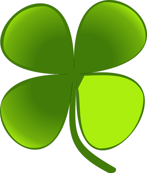 four leaf clover shamrock plants