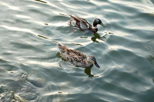 Fowl Weather Friends